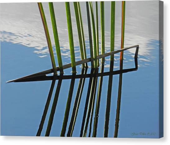 Reeds In Wetlands Canvas Print