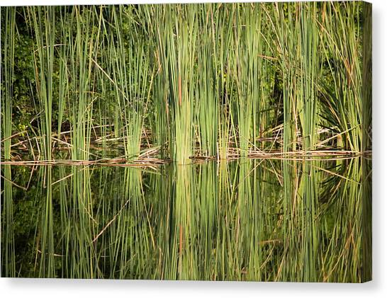 Reeds Of Reflection Canvas Print
