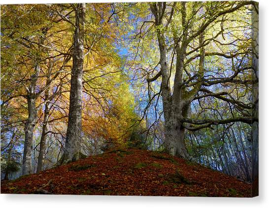 Reelig Forest  Canvas Print