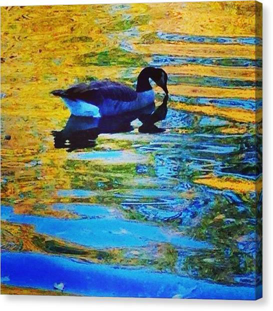 Water Birds Canvas Print - Reflect by Go Inspire Beauty