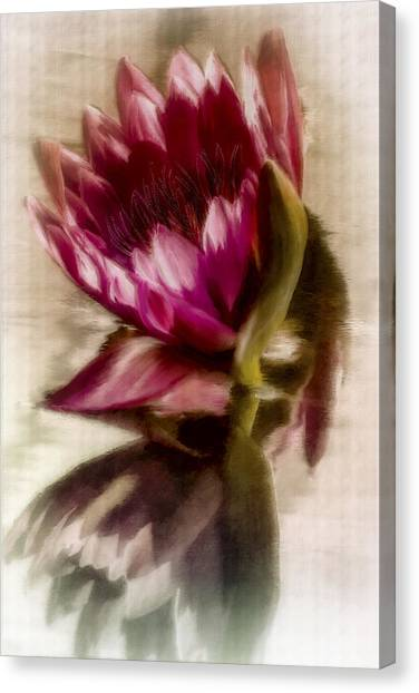Reflected Waterlily Canvas Print by Jill Balsam