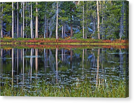 Reflecting Nature Canvas Print