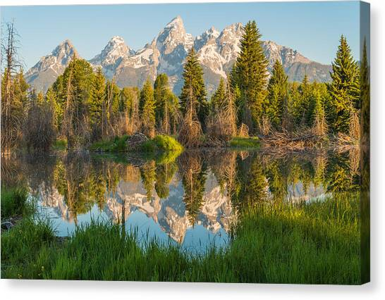 Teton Canvas Print - Reflecting On Everything by Kristopher Schoenleber
