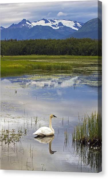 Reflecting Swan Canvas Print