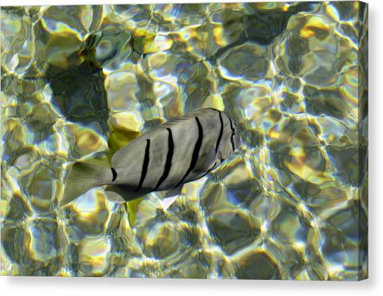 Reflection Fish Canvas Print