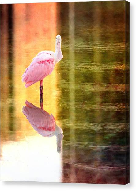 Spoonbills Canvas Print - Reflection Of A Roseate Spoonbill by Vicki Jauron