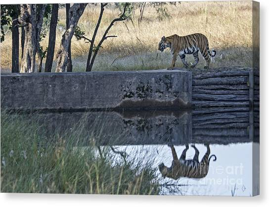Reflection Of A Tiger Canvas Print