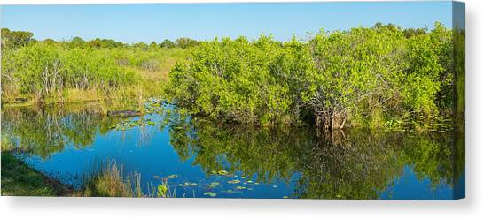 Anhinga Canvas Print - Reflection Of Trees In A Lake, Anhinga by Panoramic Images