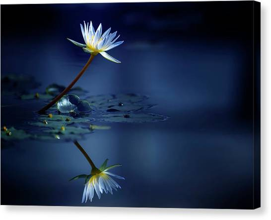 Lilies Canvas Print - Reflection by Takashi Suzuki