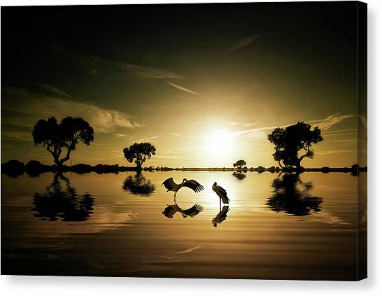 Cranes Canvas Print - Reflections In The Lake by Jose C. Lobato