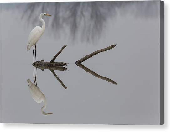 Herons Canvas Print - Reflections by Mauro Montuori
