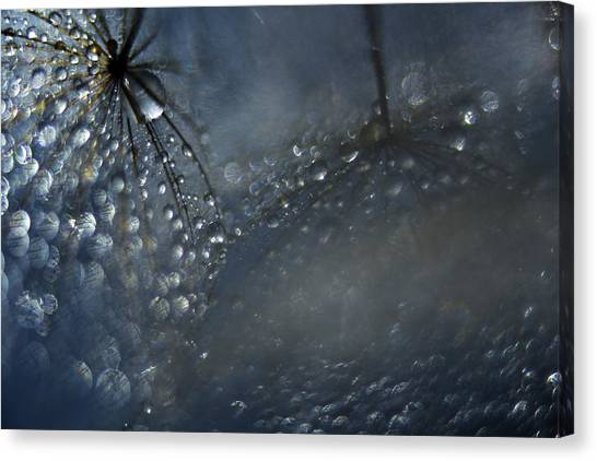 Close-up Canvas Print - Reflections Of A Late Evening by Heidi Westum