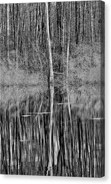 Reflections Of A Swamp Canvas Print