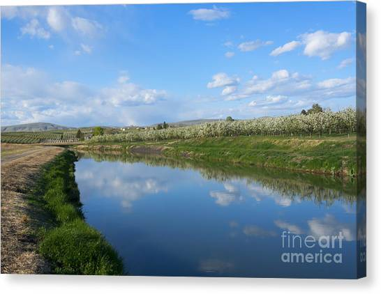 Rattlesnakes Canvas Print - Reflections Of Spring by Mike  Dawson
