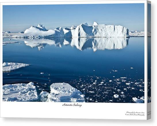 Reflective Icebergs Canvas Print by David Barringhaus