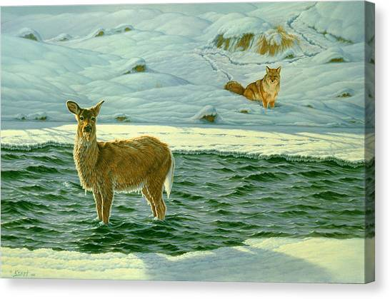 Coyotes Canvas Print - Refuge by Paul Krapf