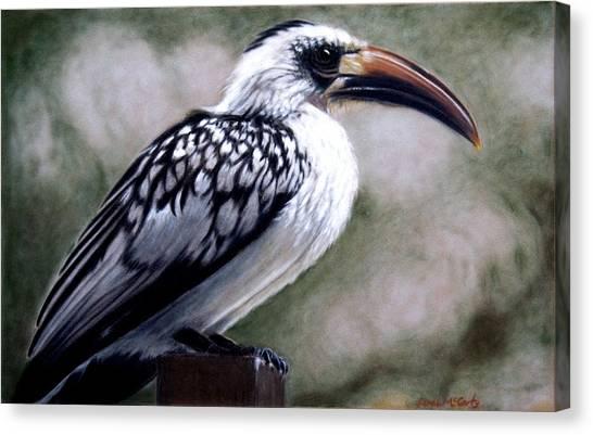 Regal Hornbill Canvas Print