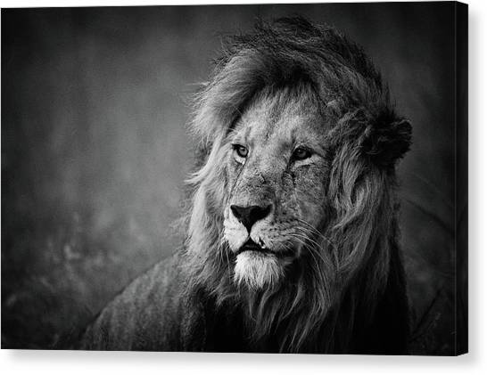 Africa Wildlife Canvas Print - Regal by Mohammed Alnaser