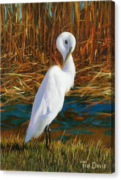 Regal White Canvas Print by Tim Davis