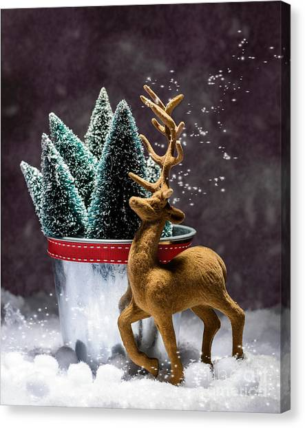 Snowball Canvas Print - Reindeer At Christmas by Amanda Elwell