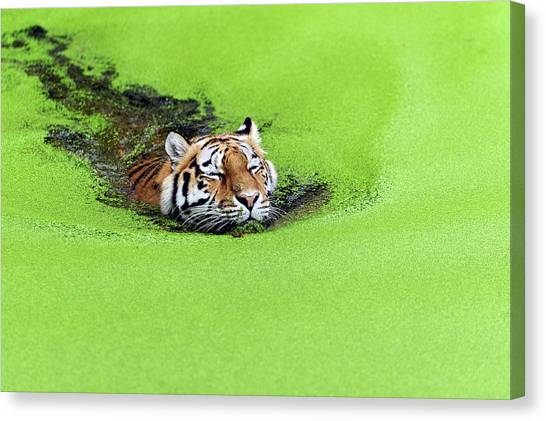 Swimming Canvas Print - Relaxation by