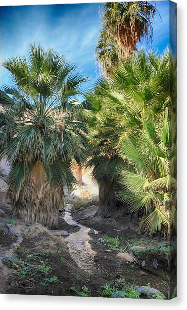 Oasis Canvas Print - Relief by Laurie Search
