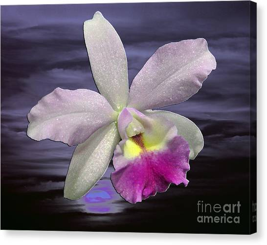 Renewal Canvas Print