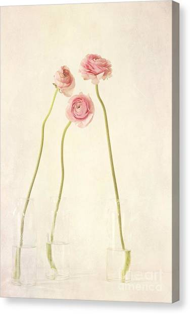 Still Life Canvas Print - Renoncules by Priska Wettstein