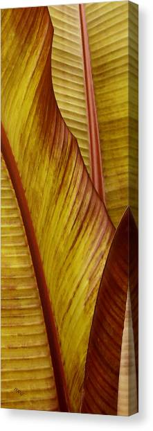 Repose - Leaf Canvas Print
