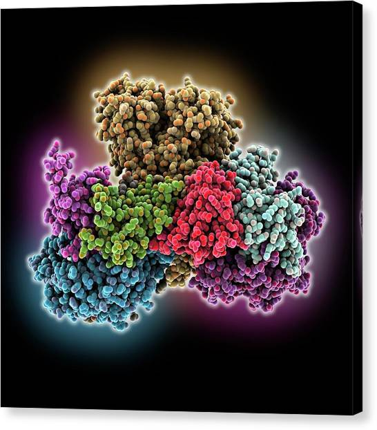 Biochemistry Canvas Print - Respiratory Complex I by Laguna Design