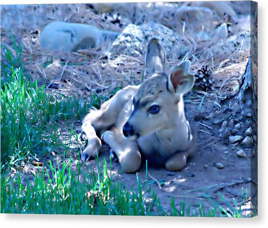 Resting Fawn Canvas Print by Rebecca Adams