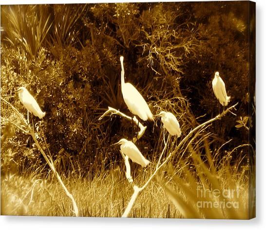 Resting Flock Sepia Canvas Print