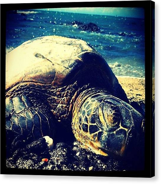 Sea Turtles Canvas Print - Resting Honu by Mary Kukana   Cajski