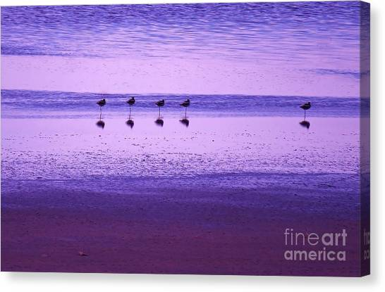 Avocets Resting In The Sunset Canvas Print