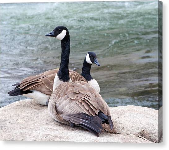Resting On A Rock Canvas Print