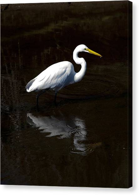 Resting Reflection Canvas Print