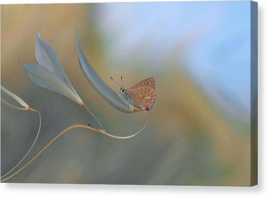 Bug Canvas Print - Resting Smoothly... by Thierry Dufour