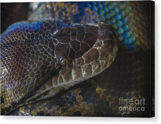 Reticulated Python With Rainbow Scales Canvas Print
