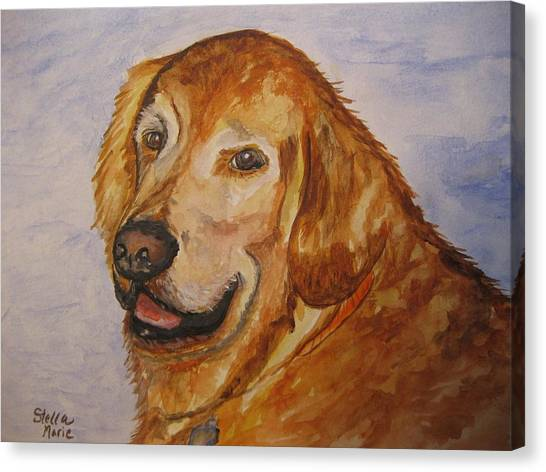 Retriever In His Golden Years Canvas Print