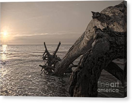 Canvas Print featuring the photograph Returning To The Sea by Glenda Wright