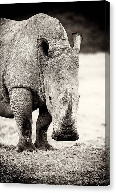 One Horned Rhino Canvas Print - Rhino After The Rain by Mike Gaudaur