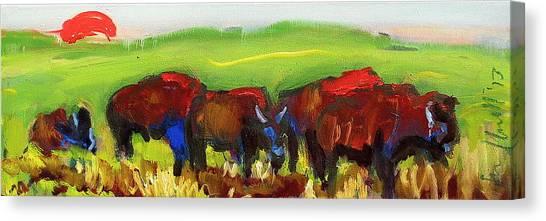 Rhino Buffalo Canvas Print
