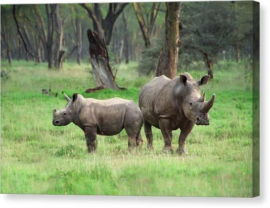 Rhinoceros Canvas Print - Rhino Family by Sebastian Musial