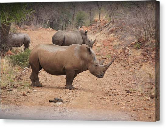 South African Canvas Print - Rhino by Gerbrandt Steyn