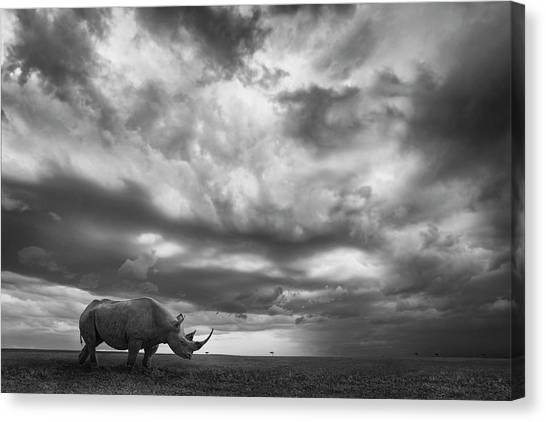 Rhinos Canvas Print - Rhino Land by Mario Moreno