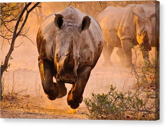 Danger Canvas Print - Rhino Learning To Fly by Justus Vermaak