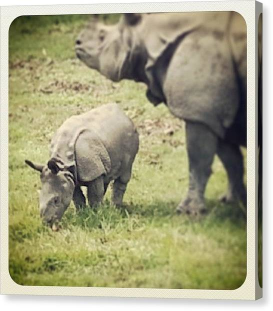 Rhinos Canvas Print - #rhino by Raimond Klavins