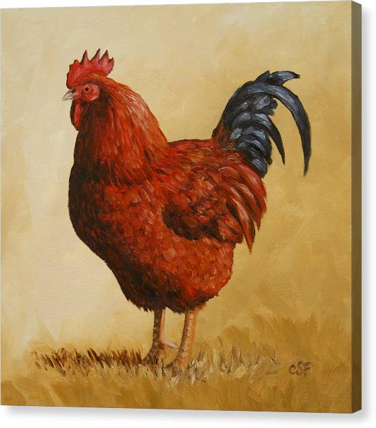 Rhode Island Canvas Print - Rhode Island Red Rooster by Crista Forest