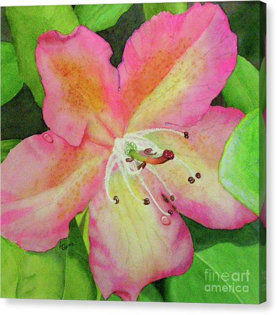 Rhodie With Dew II Canvas Print