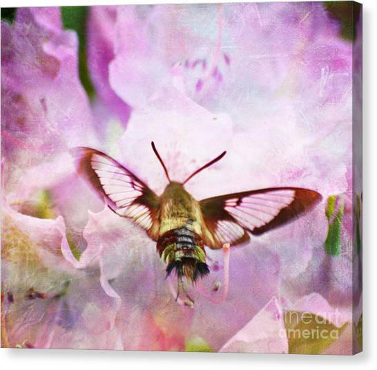 Rhododendron Dreams Canvas Print